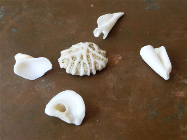 Cooper Island shell and coral fragments
