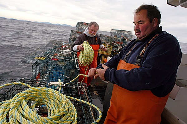 Setting lobster traps