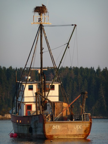 Osprey nest atop a fishing boat