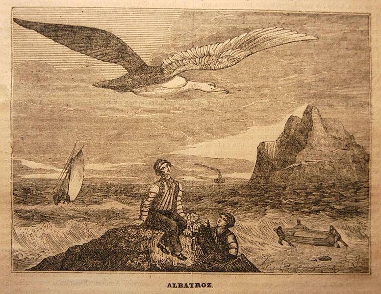 Albatross print