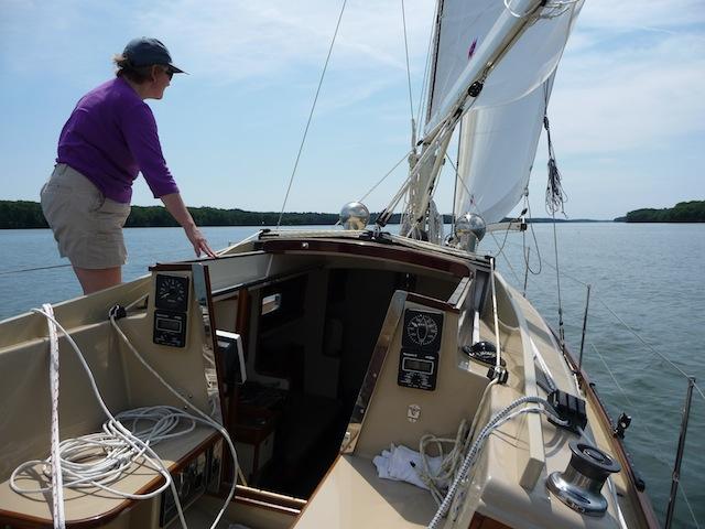 Petrel sailing