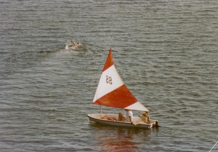 Snark under sail