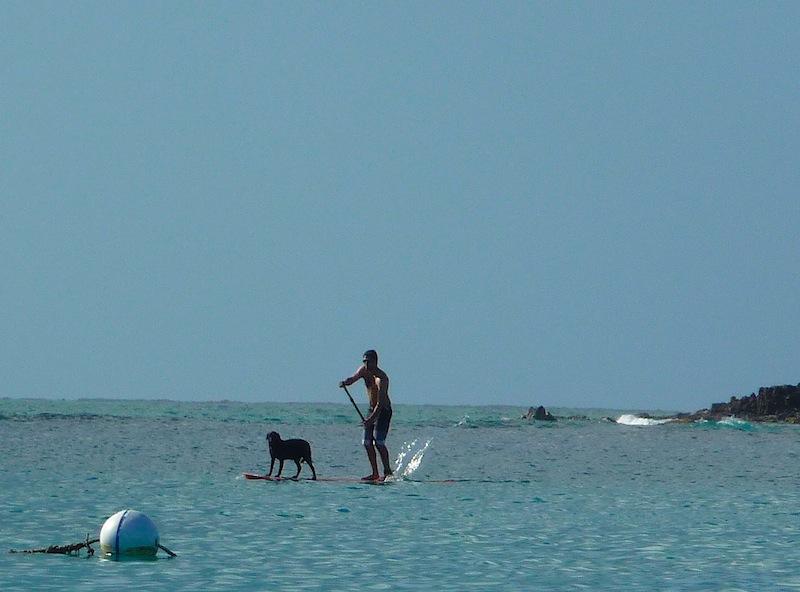 Paddle board dog