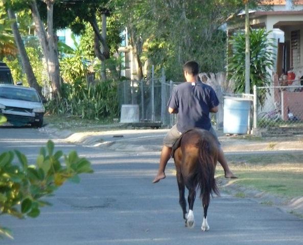 Esperanza horse
