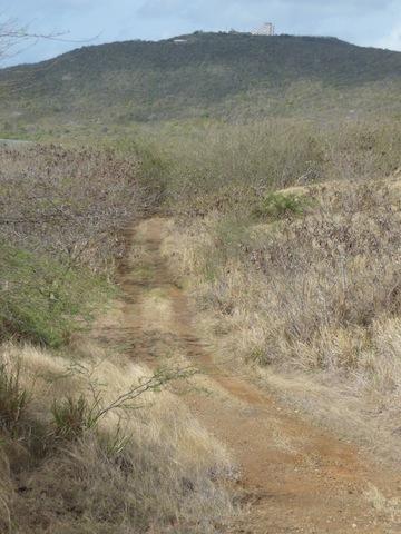 Vieques road