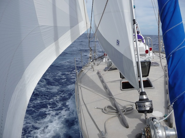Screecher and staysail