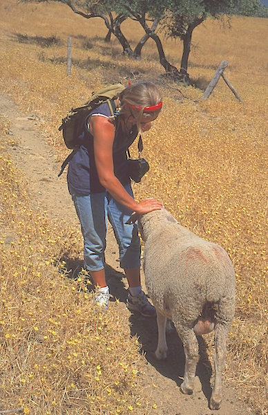 Carie and sheep