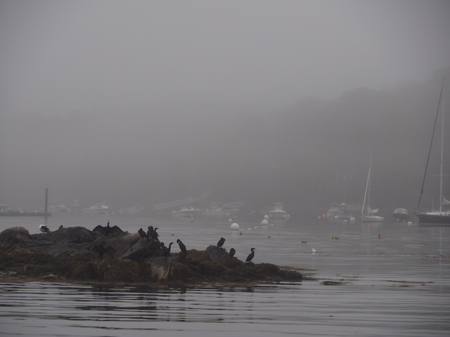 Cove in fog