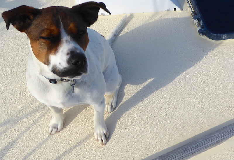 Bax on deck