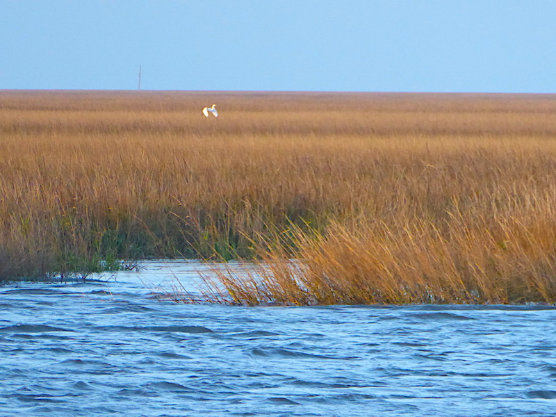 Marsh behind Sapelo
