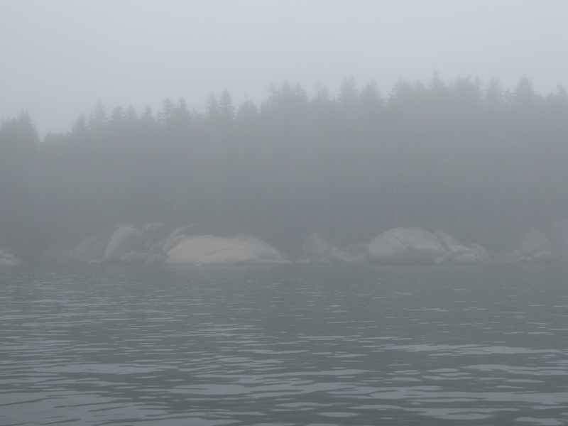 Seal Bay fog