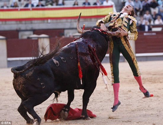 Matador gored after estocada