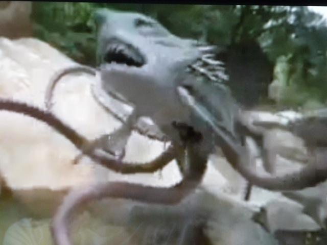 Sharktopus attack
