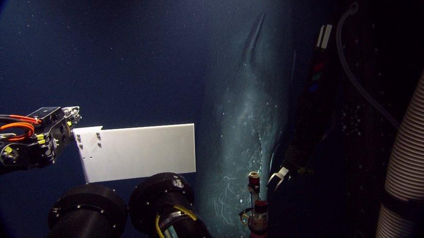Sperm whale close