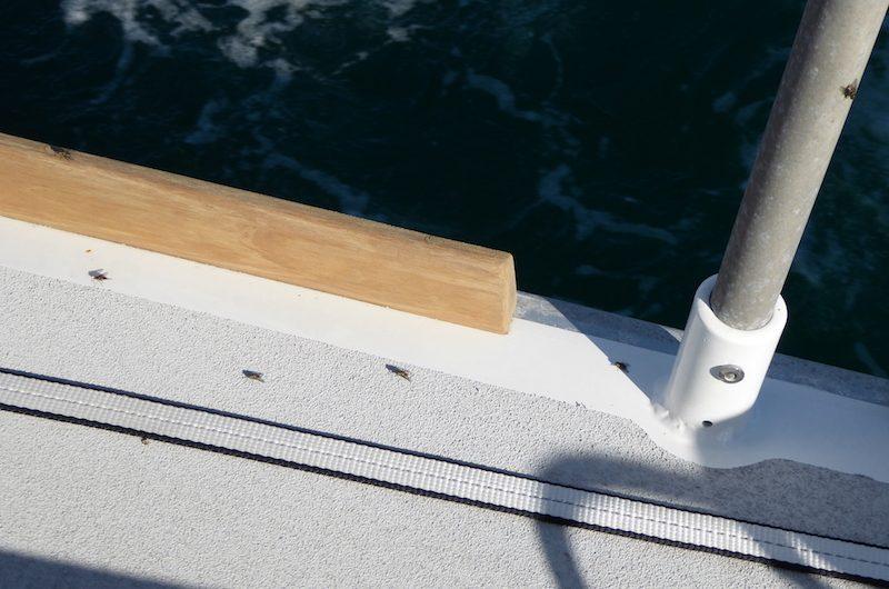 Flies onboard